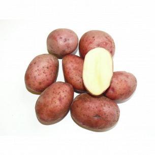 Картофель розовый молодой