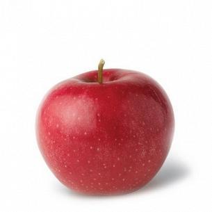 Яблуко Глостер